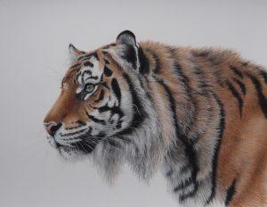 Tiger pastel painting