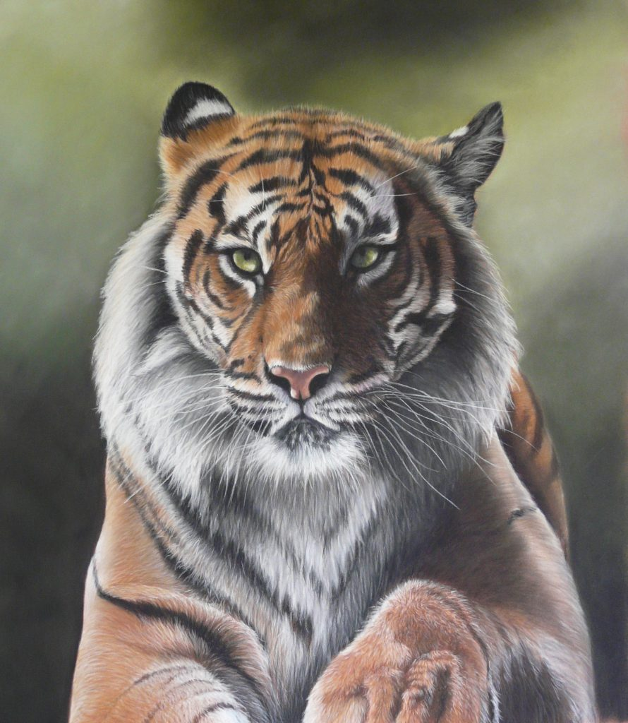 Tiger portrait in pastel