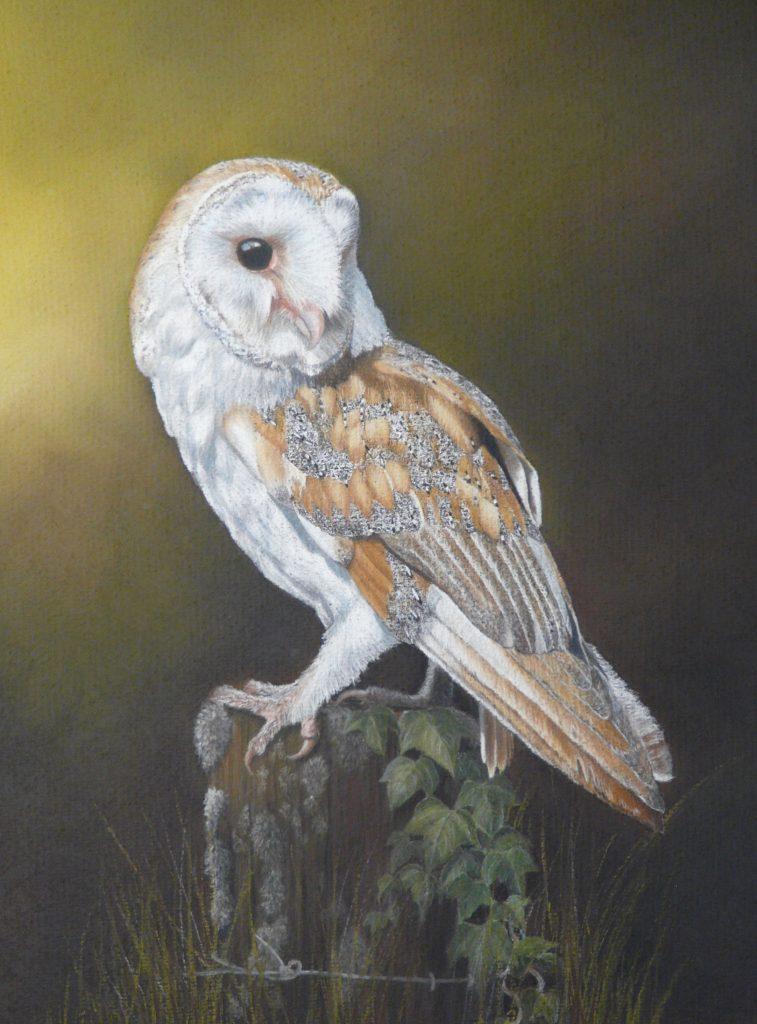 Pastel barn owl