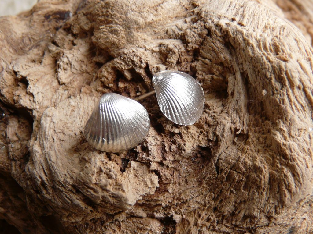 silver cockle shell studs