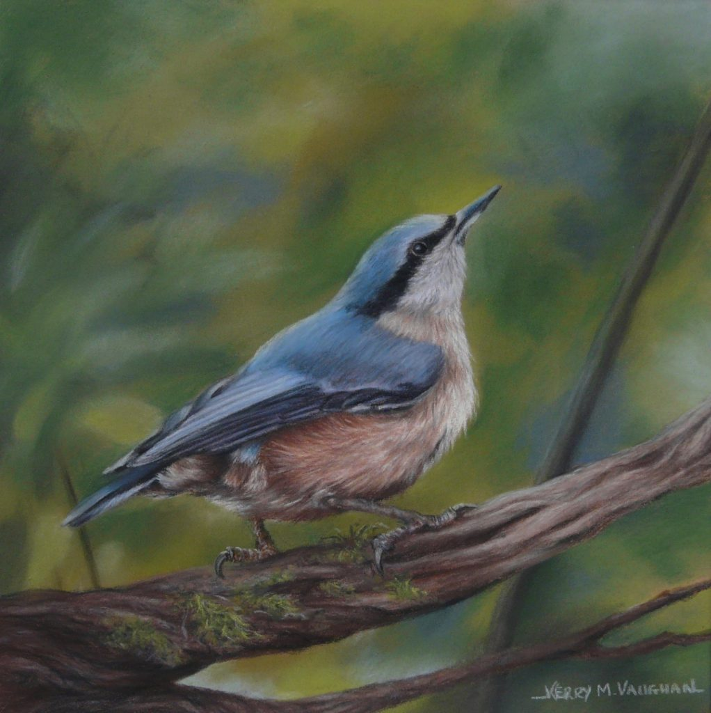 pastel Nuthatch