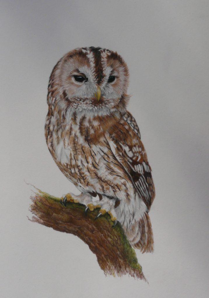 pastel Tawny owl
