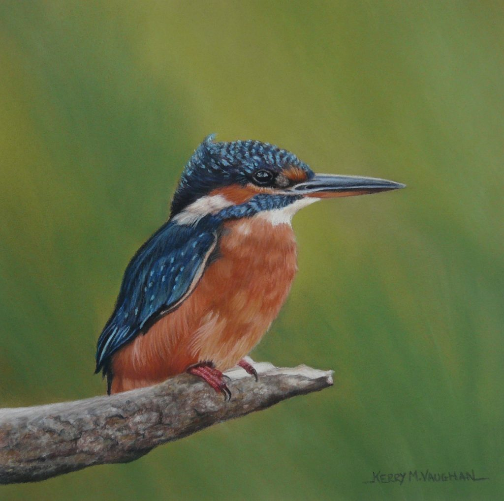 pastel Kingfisher