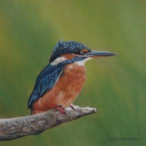 pastel Kingfisher